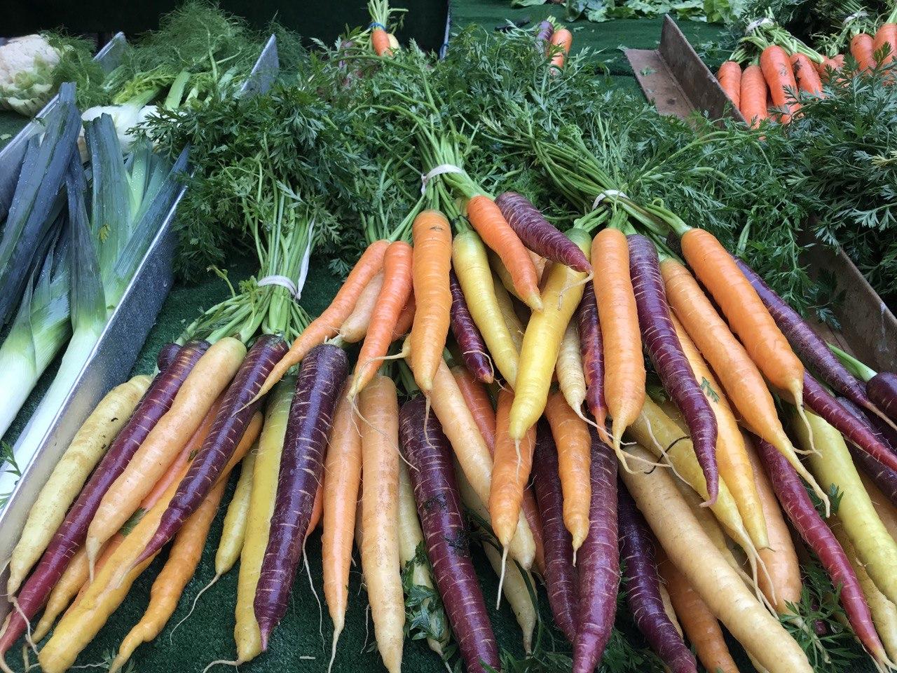 Zanahorias ecológicas para apoyar a la gastronomía sostenible